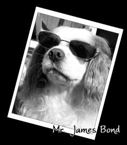 Mr  James Bond