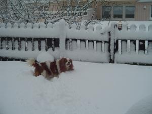 Sessan älskar snö