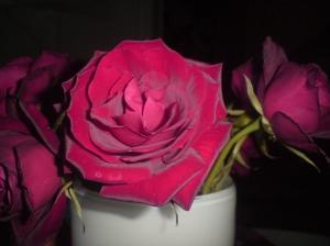 En vacker ros till mina kollegor