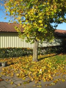 Marken fylld av löv