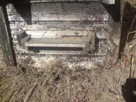 Marssnö - myror