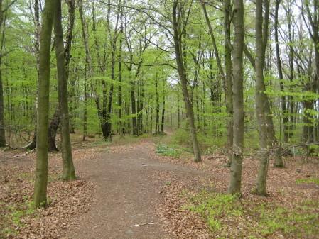Bokskog i vacker grönska