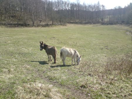 Två åsnor