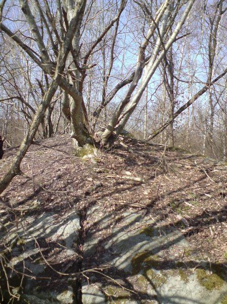 Finurligt träd