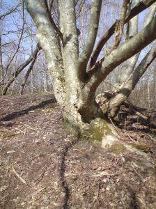 Träd i sten