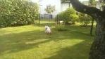 Lek i trädgården på Koloniområdet