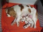 Stella med nyfödda valpar