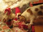 Stella söker sin jullklapp